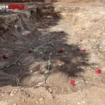 Fosa de Estépar dónde fueron exhumados los últimos cadáveres en abril de 2015: un clavel por cada asesinado